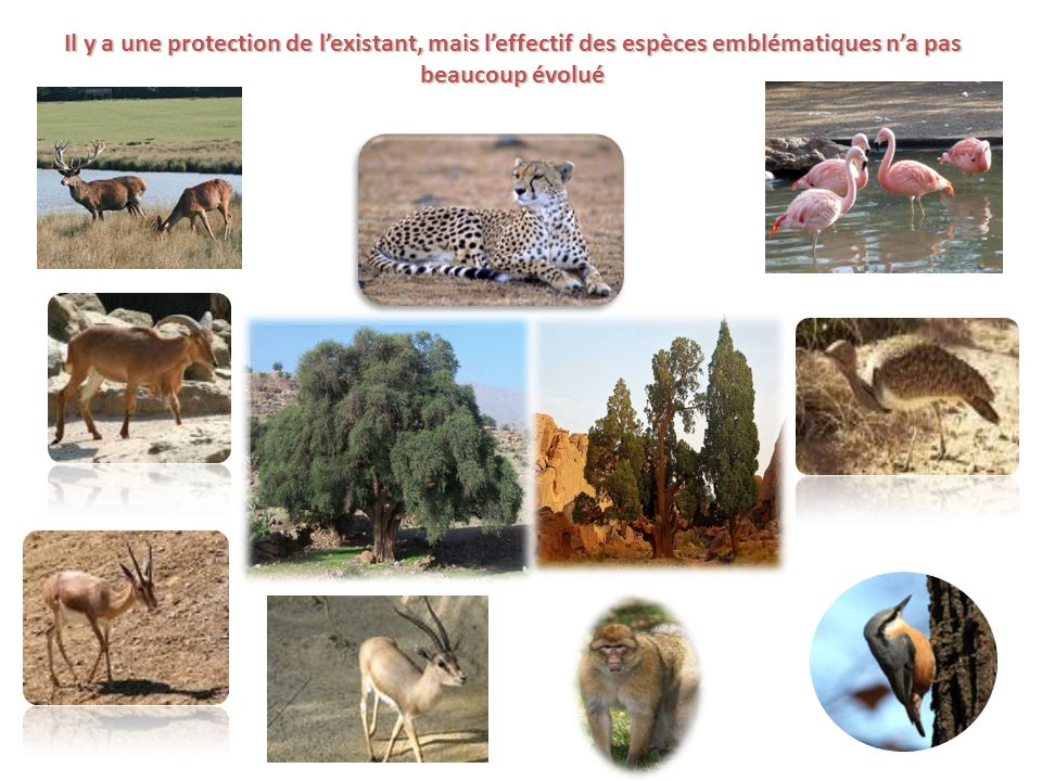 Il y a une protection de l'existant, mais l'effectif des espèces emblématiques n'a pas beaucoup évolué