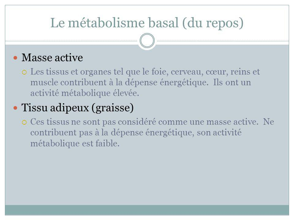 Le métabolisme basal (du repos)