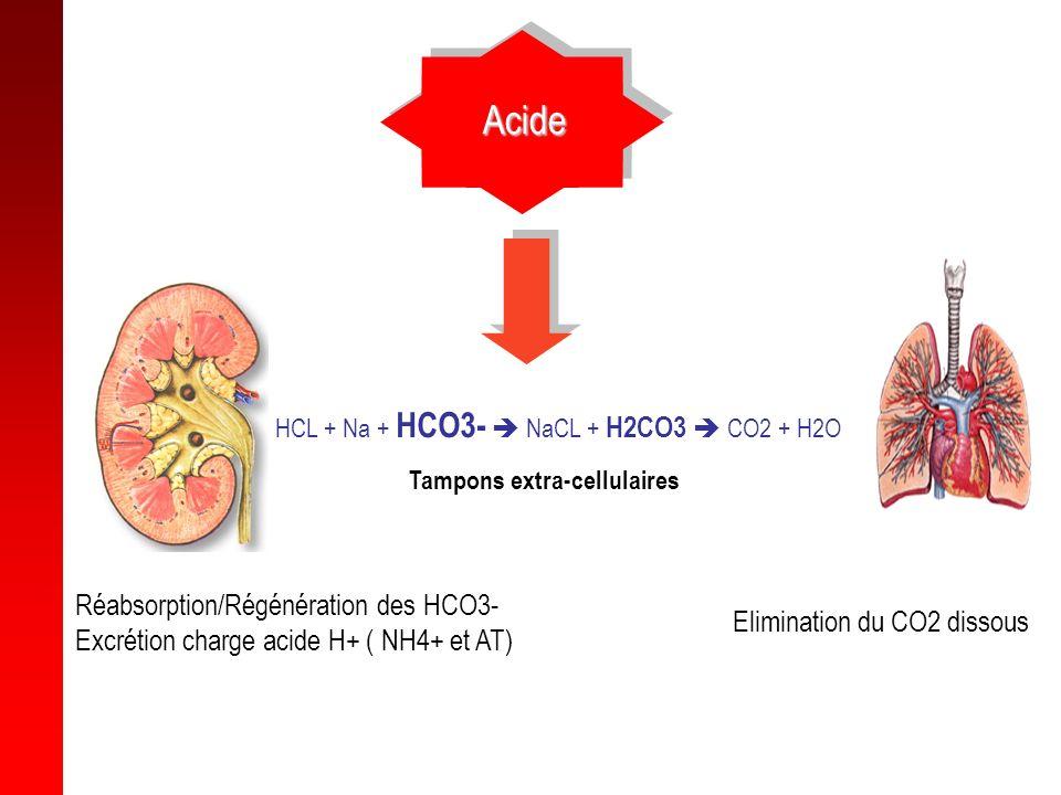 Acide Réabsorption/Régénération des HCO3-