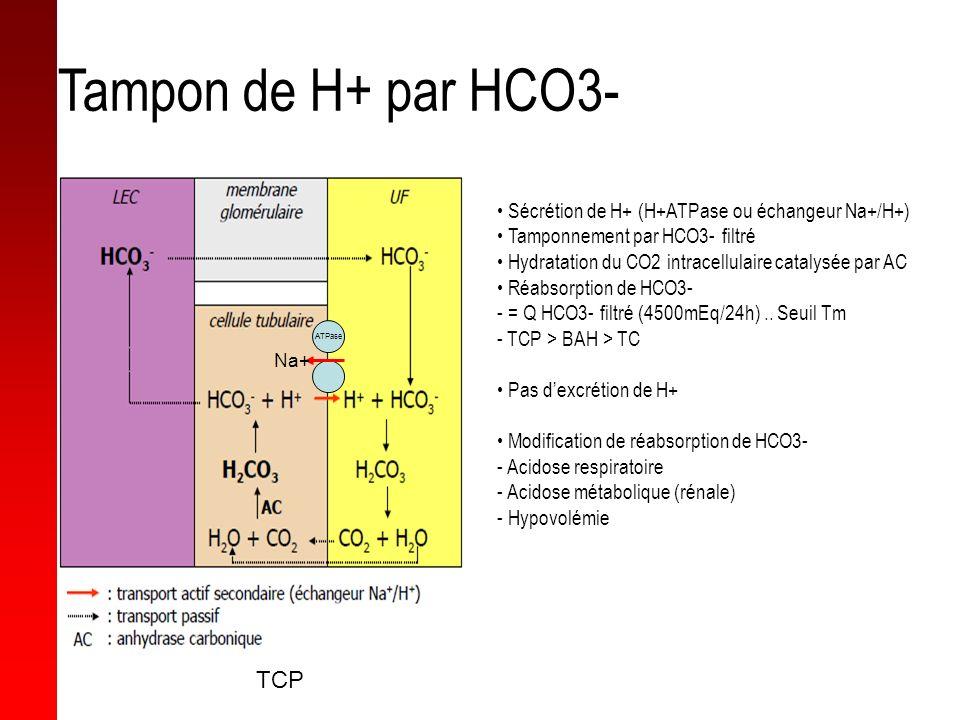 Tampon de H+ par HCO3- TCP