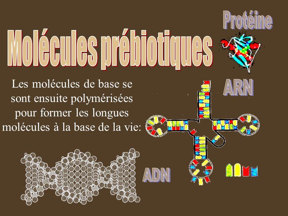 Molécules prébiotiques