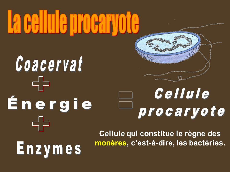 Coacervat Cellule procaryote