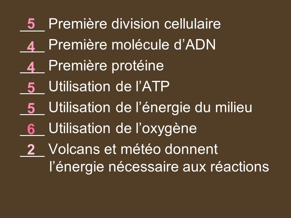 ___ Première division cellulaire