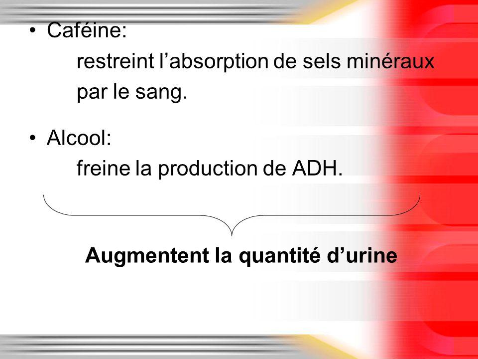 Caféine: restreint l'absorption de sels minéraux. par le sang. Alcool: freine la production de ADH.
