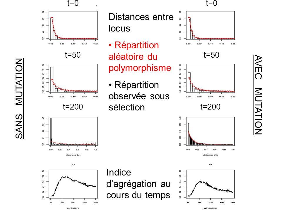 Répartition aléatoire du polymorphisme