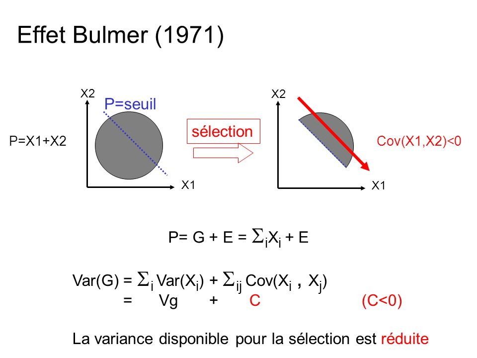 Effet Bulmer (1971) P=seuil sélection P= G + E = iXi + E