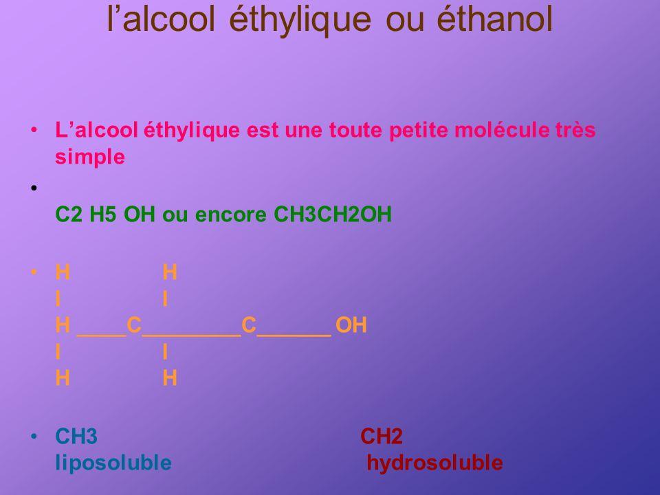 l'alcool éthylique ou éthanol