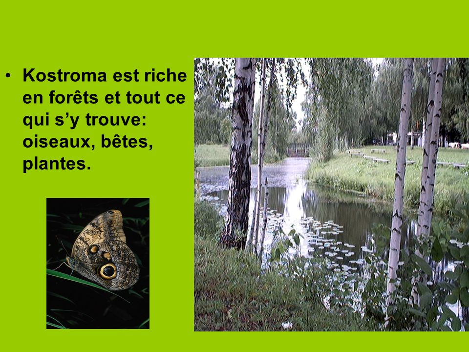 Kostroma est riche en forêts et tout ce qui s'y trouve: oiseaux, bêtes, plantes.