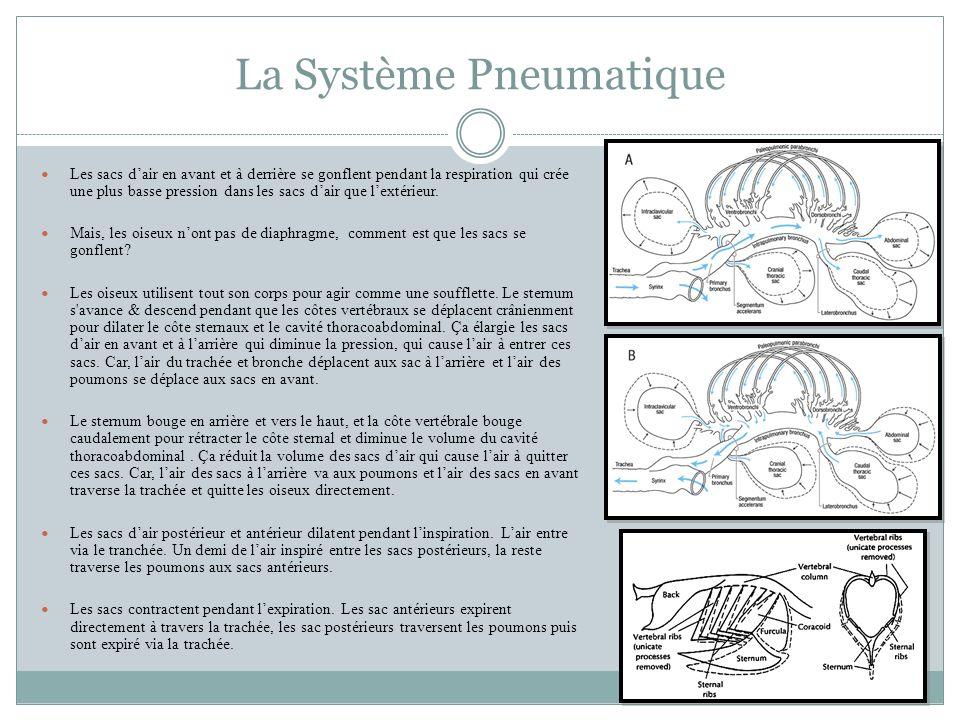 La Système Pneumatique