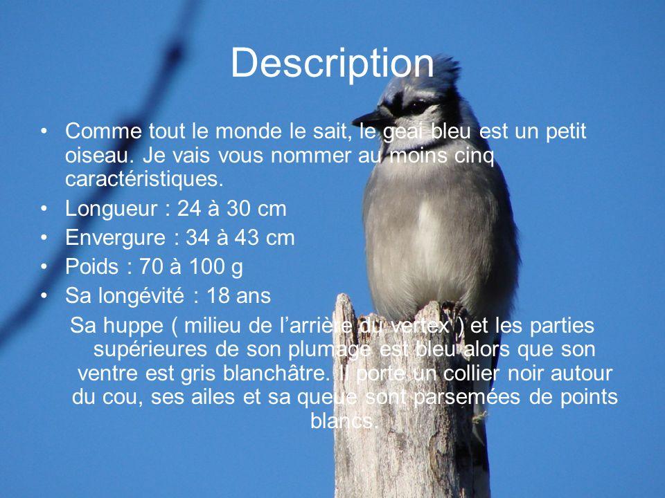 Description Comme tout le monde le sait, le geai bleu est un petit oiseau. Je vais vous nommer au moins cinq caractéristiques.