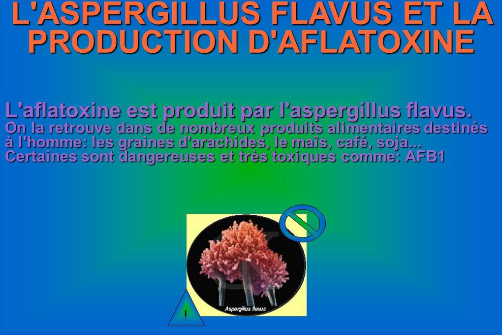 L ASPERGILLUS FLAVUS ET LA PRODUCTION D AFLATOXINE