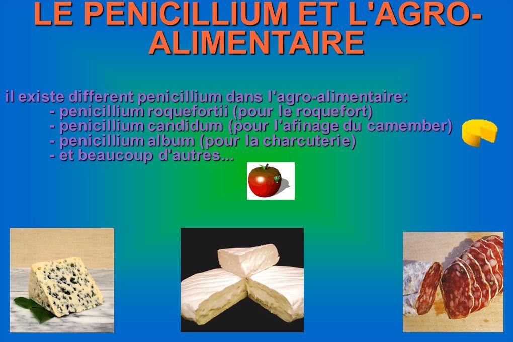 LE PENICILLIUM ET L AGRO-ALIMENTAIRE