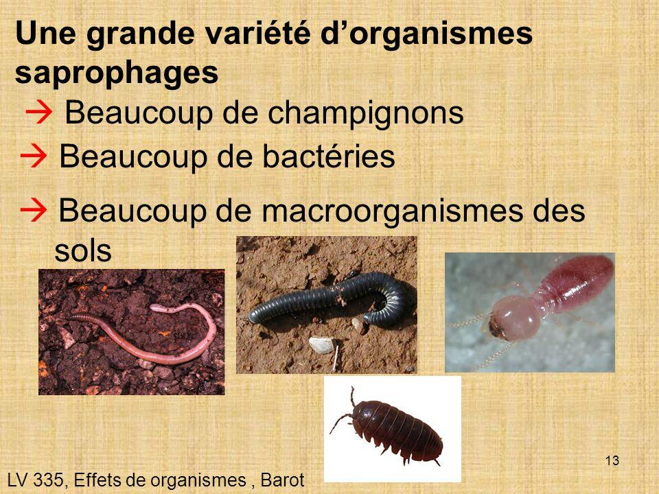 Une grande variété d'organismes saprophages