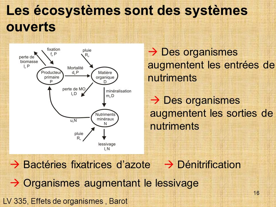 Les écosystèmes sont des systèmes ouverts