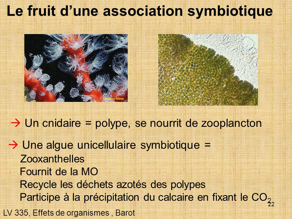 Le fruit d'une association symbiotique