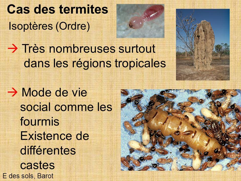 Cas des termites  Très nombreuses surtout dans les régions tropicales