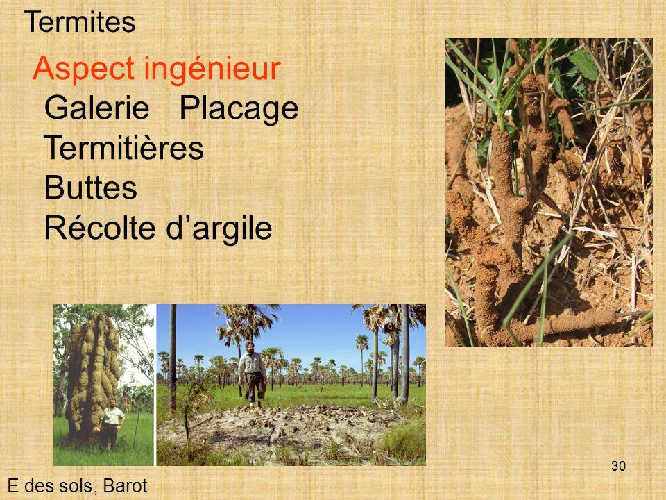 Galerie Placage Termitières Buttes Récolte d'argile