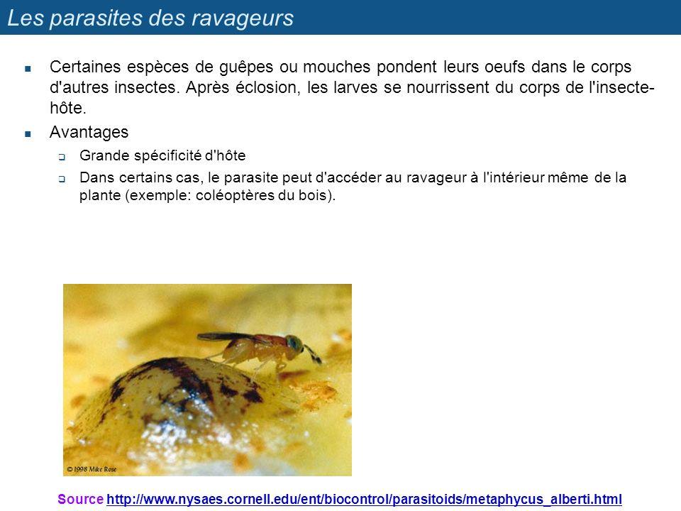 Les parasites des ravageurs