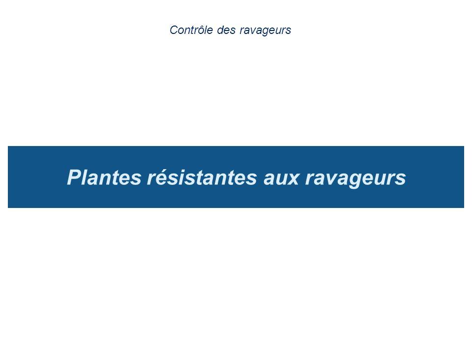 Plantes résistantes aux ravageurs