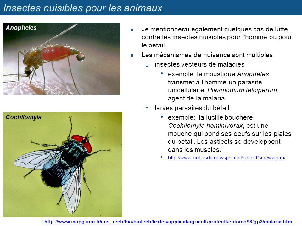 Insectes nuisibles pour les animaux