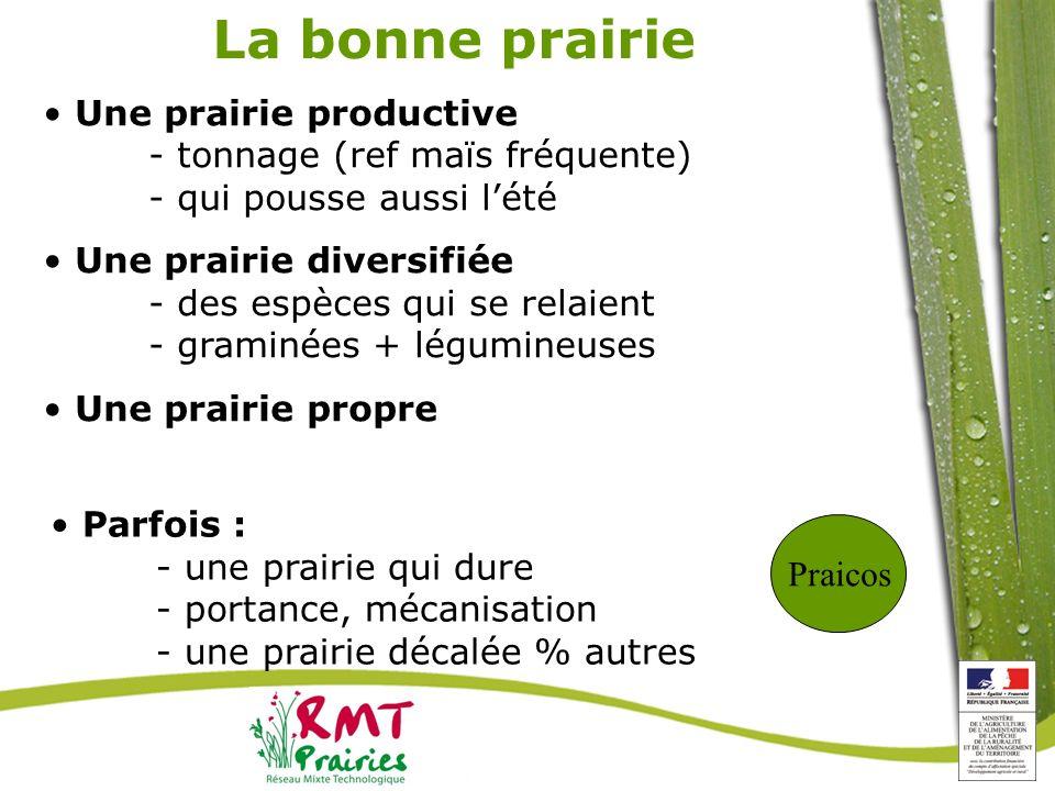 La bonne prairie Une prairie productive - tonnage (ref maïs fréquente) - qui pousse aussi l'été.