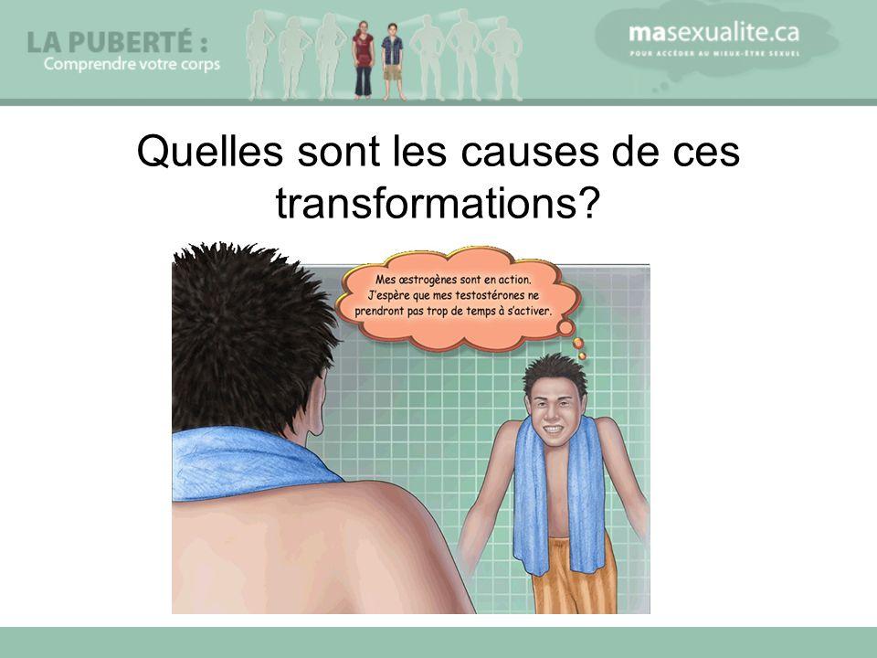 Quelles sont les causes de ces transformations