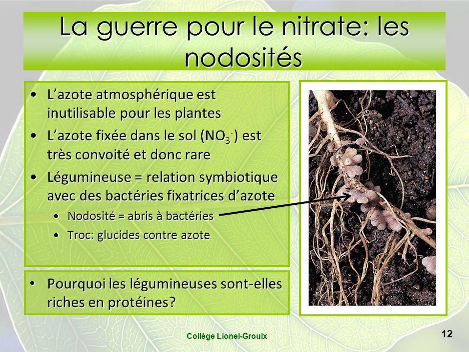 La guerre pour le nitrate: les nodosités