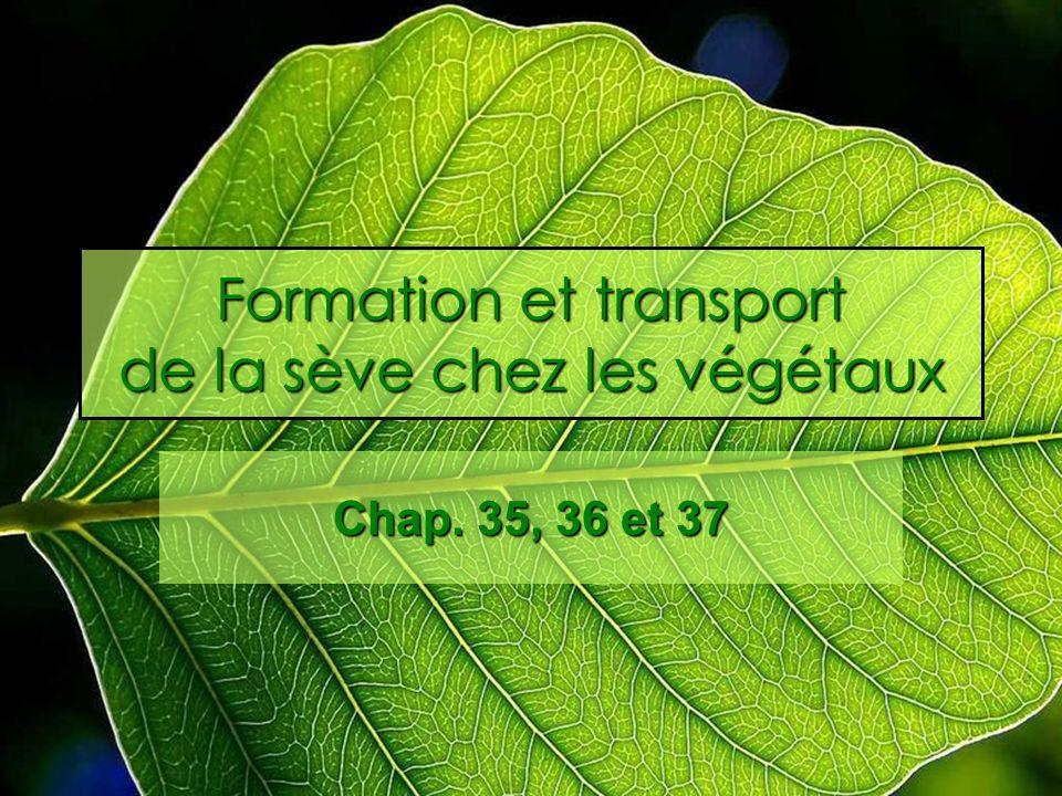 Formation et transport de la sève chez les végétaux