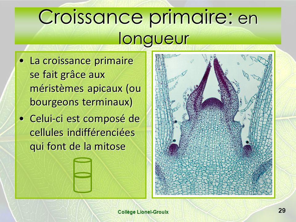 Croissance primaire: en longueur