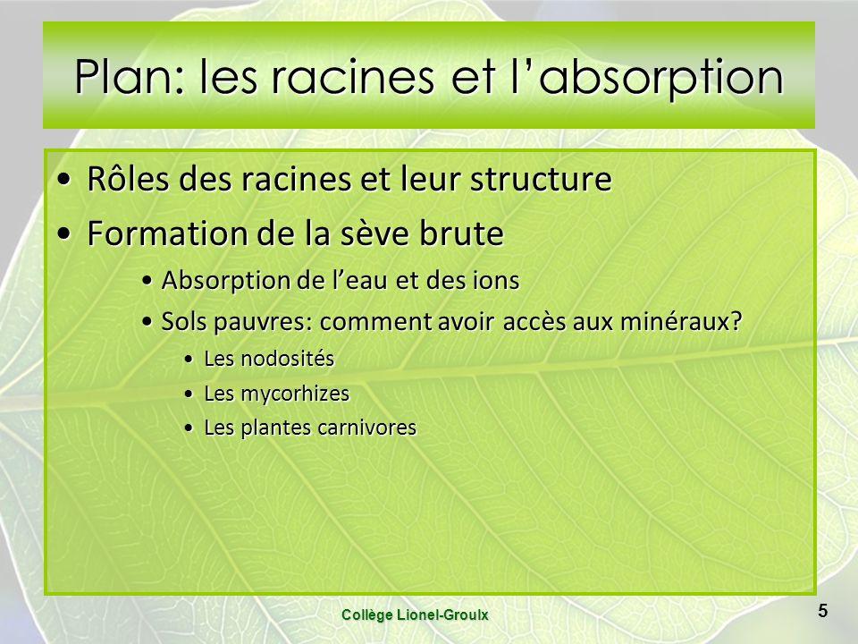 Plan: les racines et l'absorption