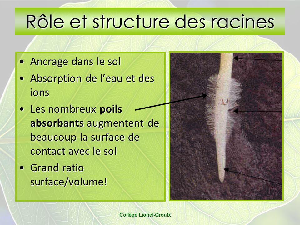 Rôle et structure des racines