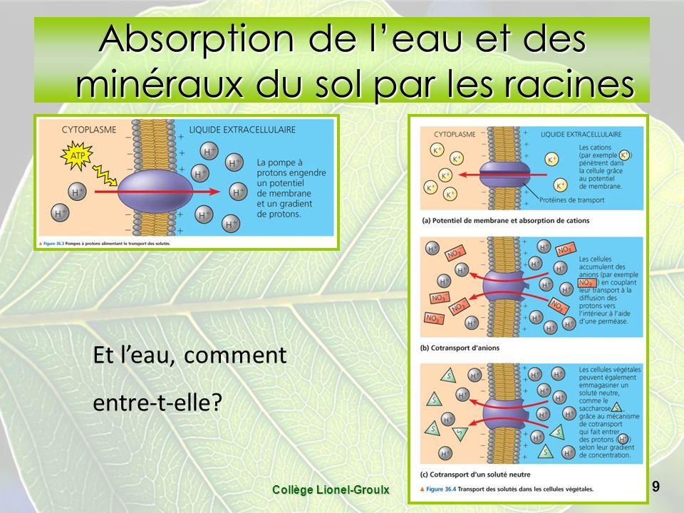 Absorption de l'eau et des minéraux du sol par les racines