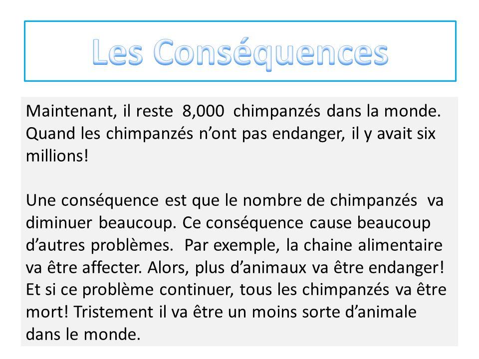 Les Conséquences Maintenant, il reste 8,000 chimpanzés dans la monde. Quand les chimpanzés n'ont pas endanger, il y avait six millions!