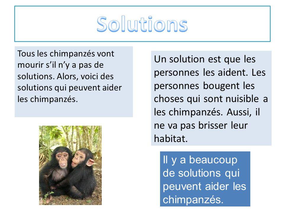 Solutions Tous les chimpanzés vont mourir s'il n'y a pas de solutions. Alors, voici des solutions qui peuvent aider les chimpanzés.