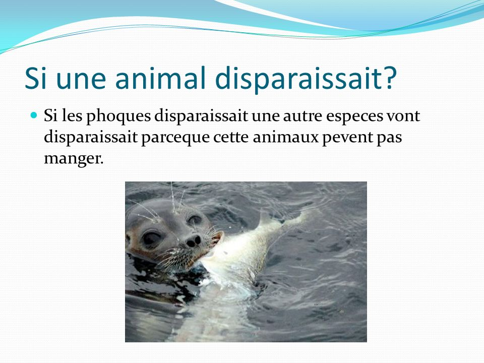 Si une animal disparaissait