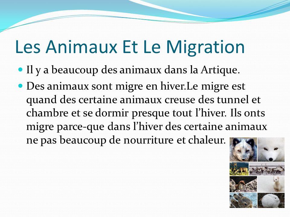 Les Animaux Et Le Migration