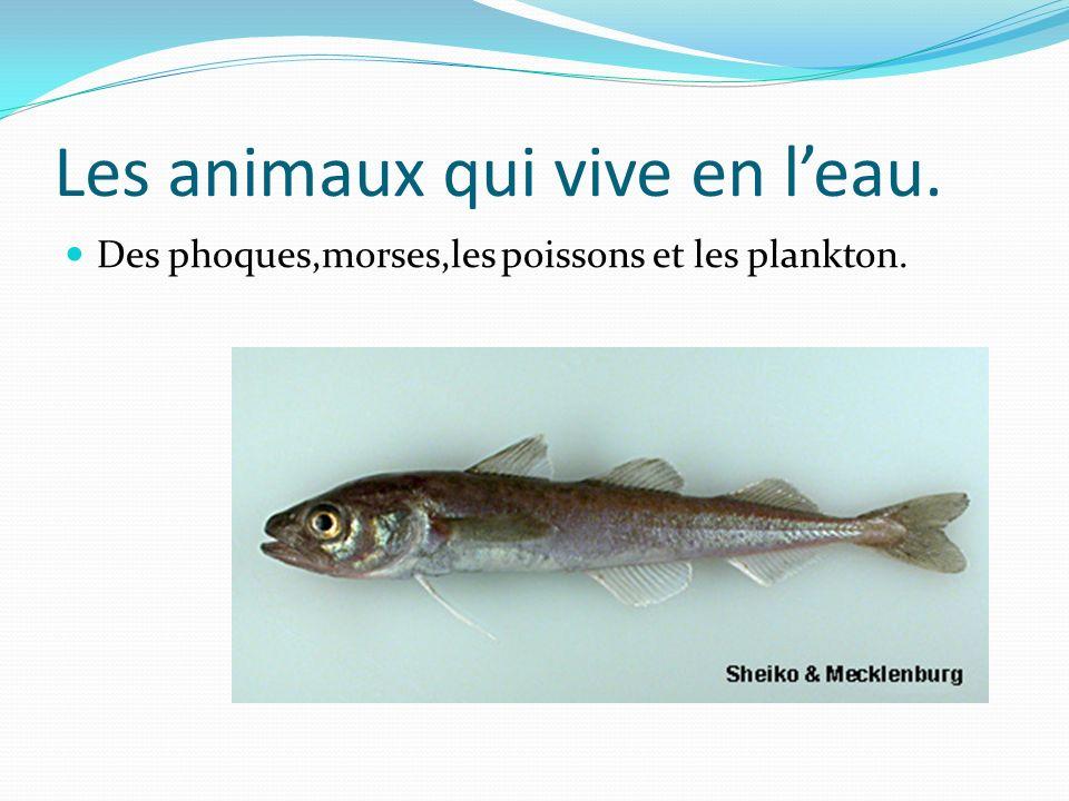Les animaux qui vive en l'eau.