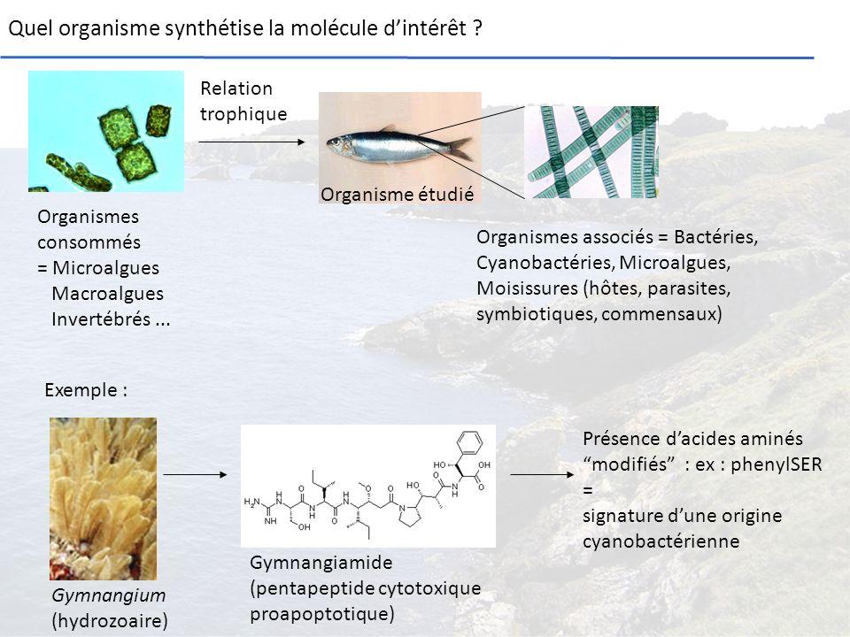 Quel organisme synthétise la molécule d'intérêt