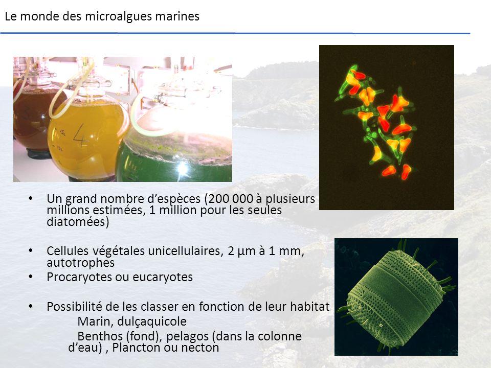 Le monde des microalgues marines