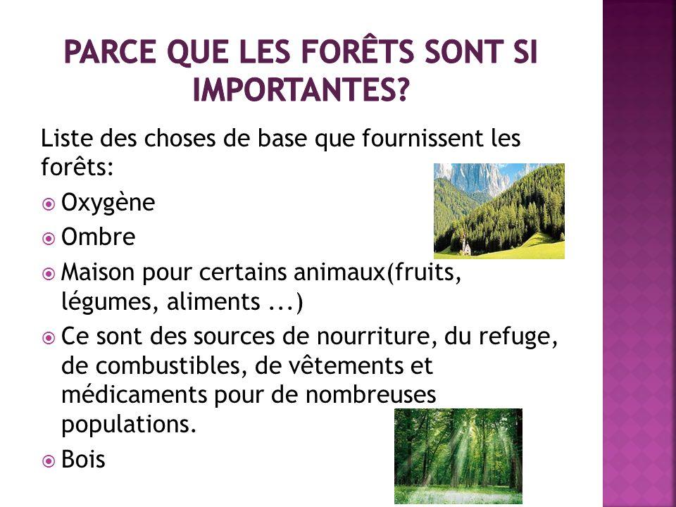 Parce que les forêts sont si importantes