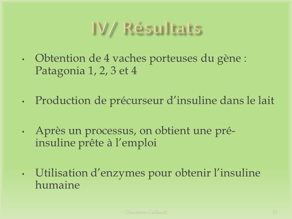 IV/ Résultats Obtention de 4 vaches porteuses du gène : Patagonia 1, 2, 3 et 4. Production de précurseur d'insuline dans le lait.