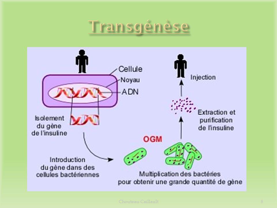 Transgénèse Chouteau-Caillault