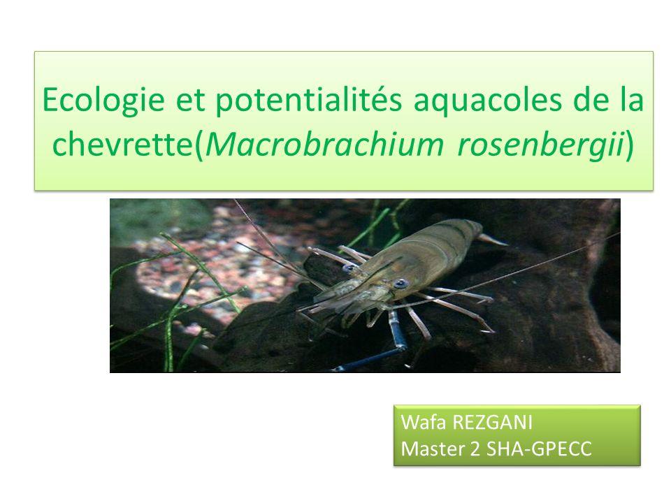 Ecologie et potentialités aquacoles de la chevrette(Macrobrachium rosenbergii)