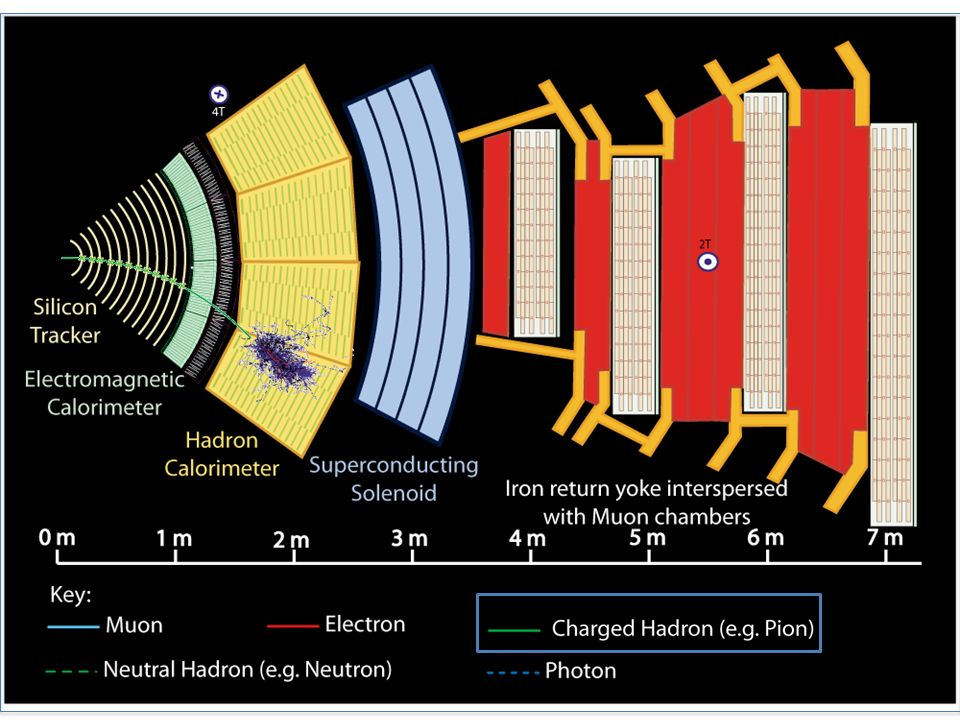 Charged hadron: Bends in the magnetic field and leaves signals in the tracker layers; passes through the electromagnetic calorimeter leaving essentially no signal, and is stopped by the hadron calorimeter