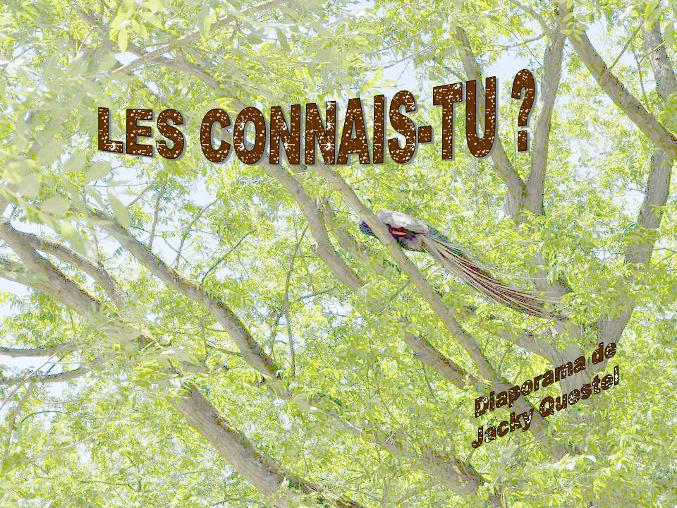 LES CONNAIS-TU Diaporama de Jacky Questel