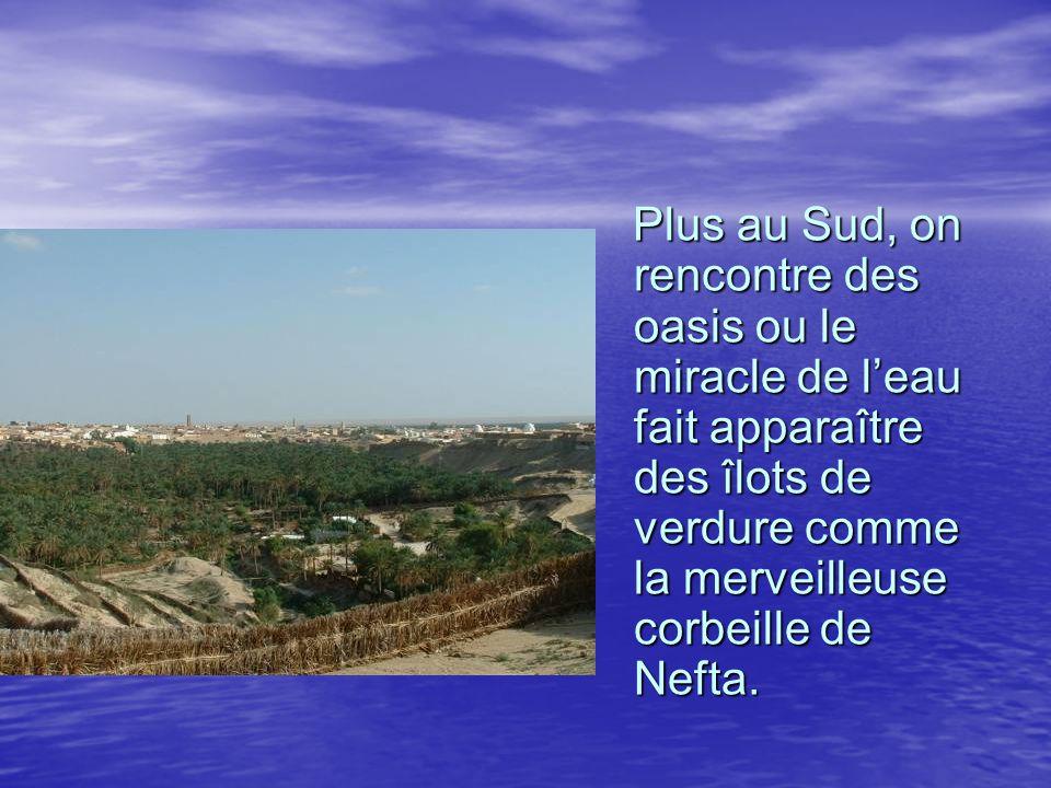 Plus au Sud, on rencontre des oasis ou le miracle de l'eau fait apparaître des îlots de verdure comme la merveilleuse corbeille de Nefta.