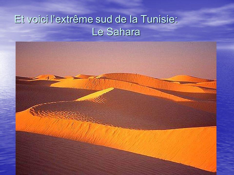 Et voici l'extrême sud de la Tunisie: Le Sahara
