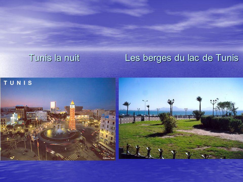 Les berges du lac de Tunis