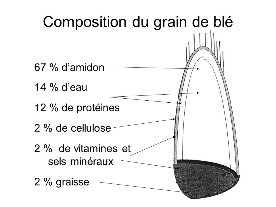 Composition du grain de blé