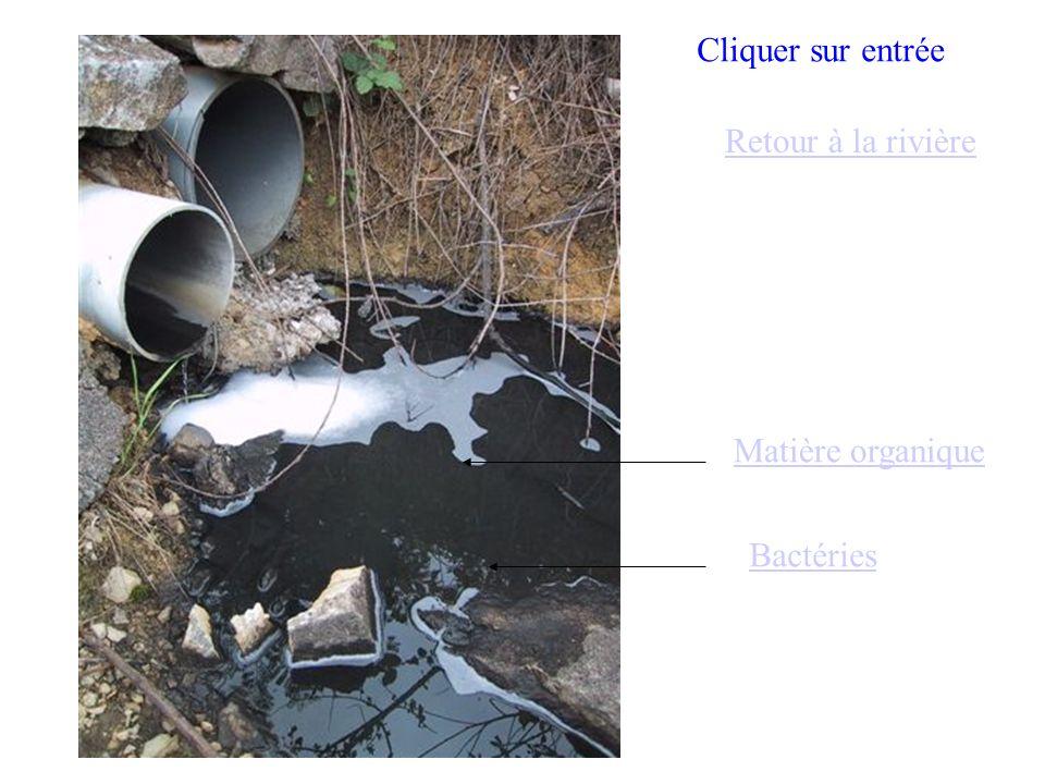 Cliquer sur entrée Retour à la rivière Matière organique Bactéries